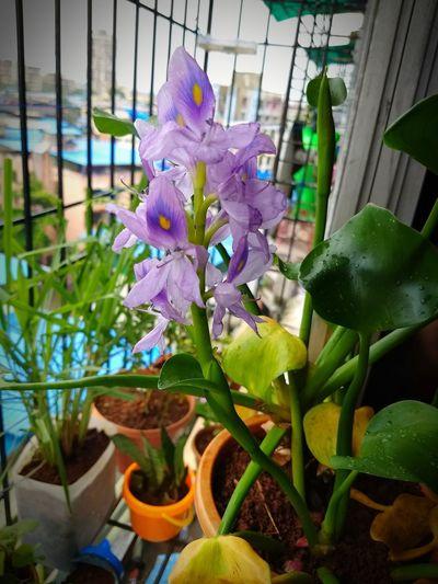 balcony gardening Flower Greenhouse Flower Head Purple Leaf Close-up Plant