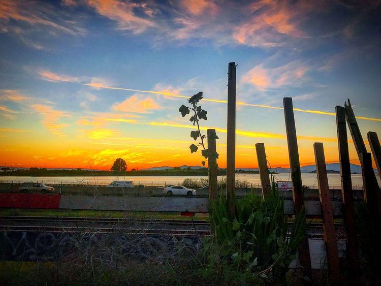 Urban Landscape 🚧🌿 Gold Coast Exposures California Sunset Bayareaphotography Berkeley, CA Urban Landscape Urbanphotography SanFranciscoBay SanFranciscoBayArea Sunset #sun #clouds #skylovers #sky #nature #beautifulinnature #naturalbeauty Photography Landscape [