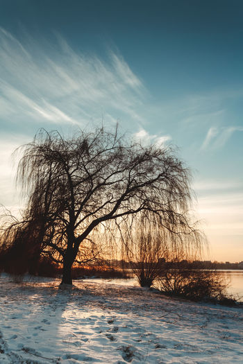 Bare Tree Beauty In Nature Cloud - Sky Cold Temperature Day Horizon Over Water Landscape Nature No People Outdoors Scenics Sea Sky Snow Tranquil Scene Tranquility Tree Water Winter