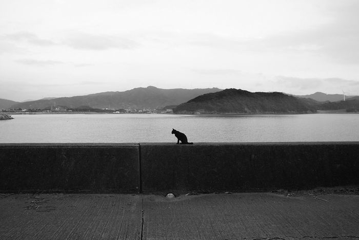 Cat Seaside Seascape Monochrome Stray Cat Black & White Blackandwhite Blackandwhite Photography Black And White EyeEm Best Shots - Black + White From My Point Of View Taking Photos EyeEm Gallery EyeEmBestPics EyeEm Best Edits EyeEm Best Shots Showcase March Eye4photography  Lightandshadow Light And Shadow