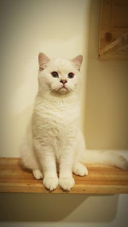 Pets Portrait Sitting Domestic Cat Feline Dog Looking At Camera