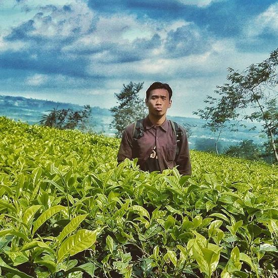 Tea farm Wonosobo Dieng Telogomenjer Holiday Dadakan