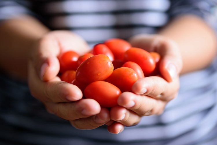 Bright Cherry Close Up Cooking Diet Eating Food Fresh Freshness Fruit Giving Hand Harvest Health Healthy Holding Ingredient Juicy Macro Nature Nutrition Organic Red Ripe Sweet Tomato Vegetable Vegeterian Vitamin Wellbeing Healthy Eating Human Hand Midsection
