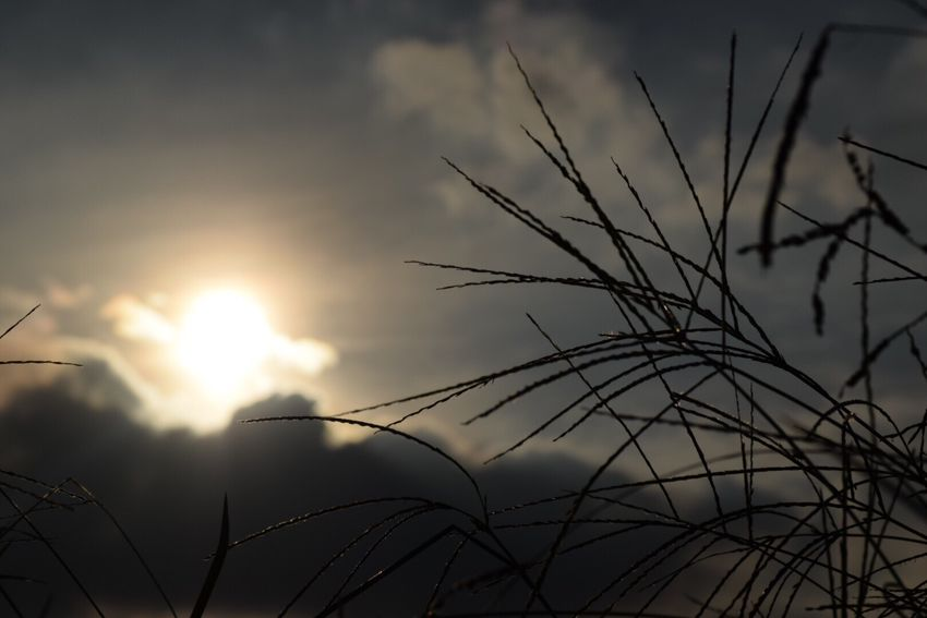 Sun Plant Growth Close-up Tranquility Scenics Silhouette Beauty In Nature Grass Focus On Foreground Sky Sunset Nature Cloud Tranquil Scene Idyllic Outdoors Stalk Day Non-urban Scene