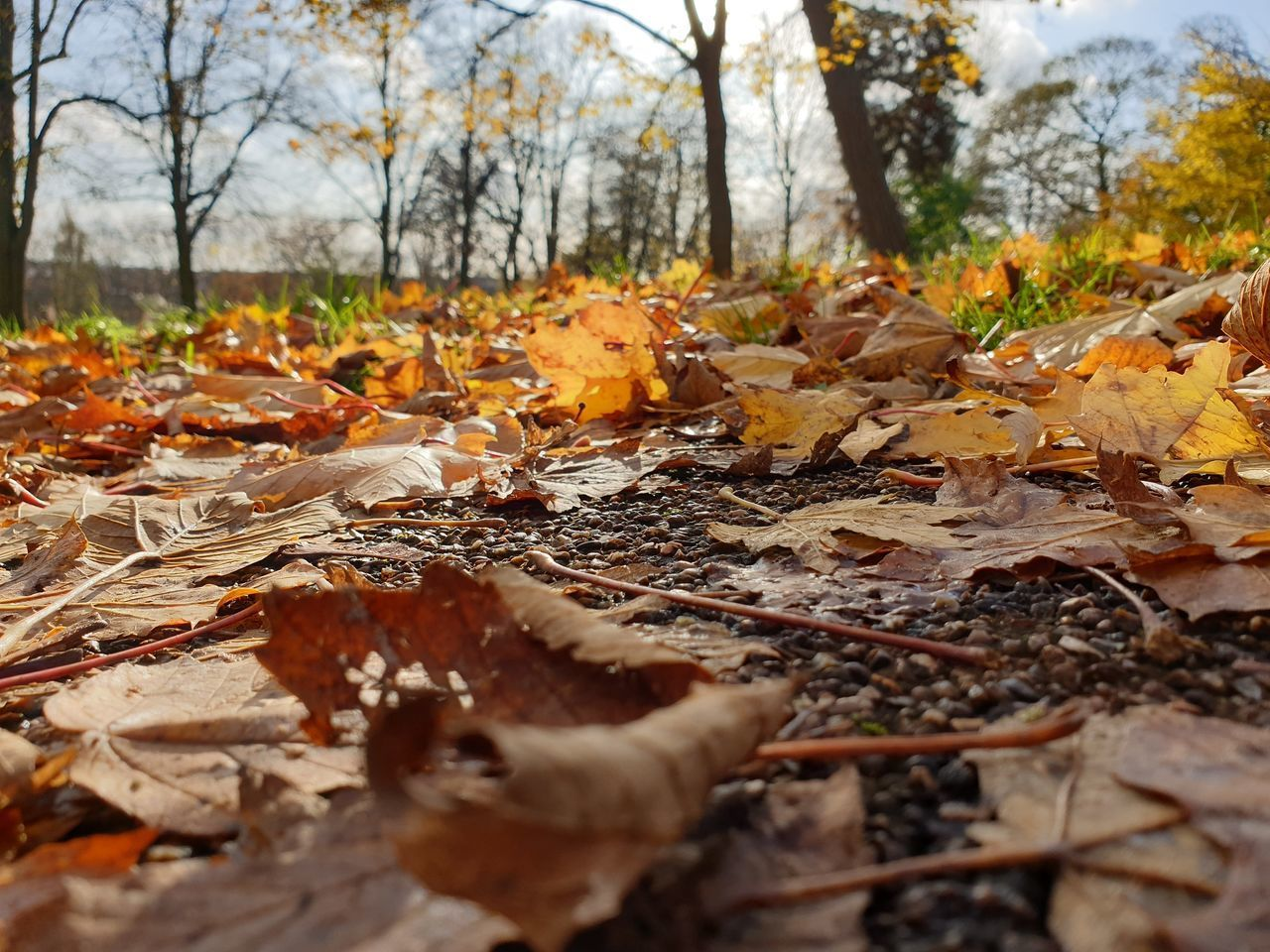 CLOSE-UP OF FALLEN LEAVES ON FIELD