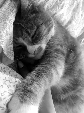 Kitty 😻 #lovely #hugs #estonia #Kitty Domestic Cat Cat Animal Themes