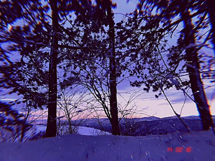Snow Winter Cold Temperature Tree Nature Beauty In Nature Weather Tranquility Landscape Snowing No People Scenics Day Branch Sky Outdoors