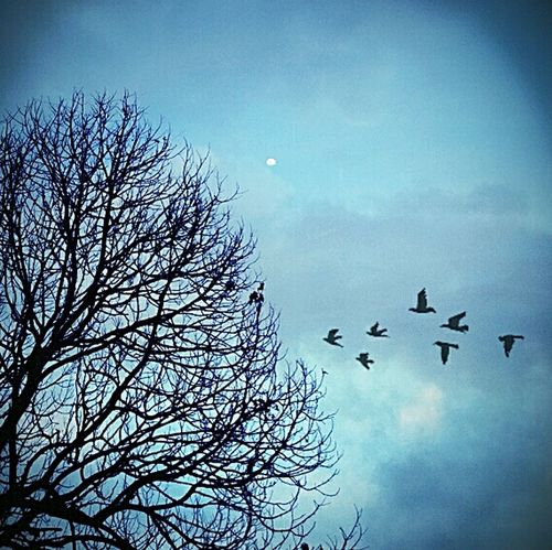 In the afternoon Nature Deadtree The Moon Birds