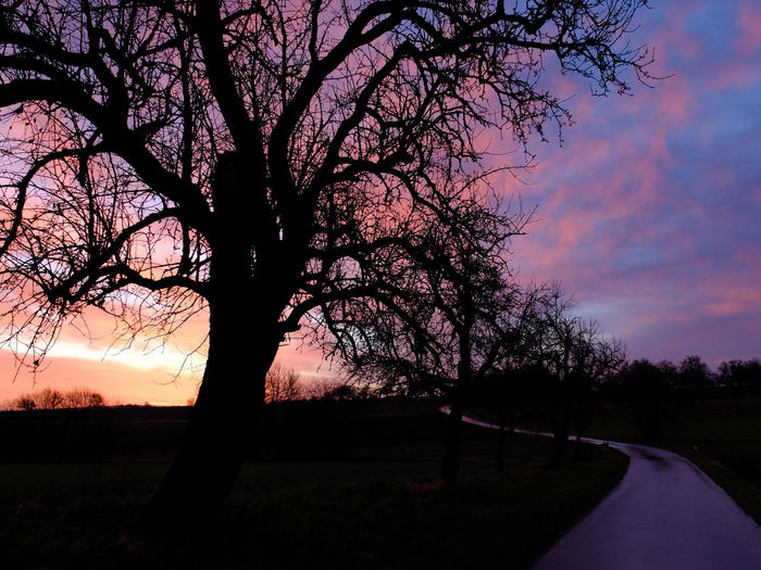 Road Bare Tree Beauty In Nature Landscape No People Pink Clouds At Sunset Pink Skys Silhouette Sunrise Tree Tree Silhouettes Tree Trunk Violet Clouds