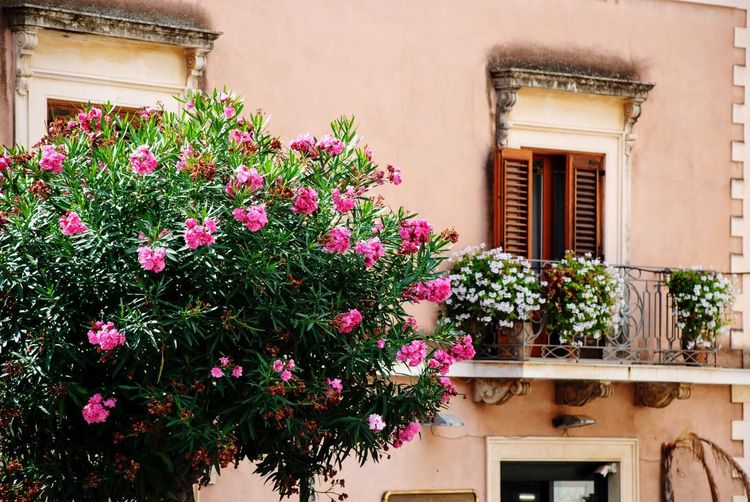 Rhododendron Balcony Façade Italy Italian Sicily Sicilia Plant Architecture Building Exterior Built Structure Growth Window Flowering Plant Building No People House Residential District Outdoors Wall - Building Feature Wall