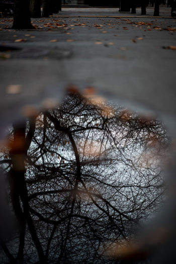 Reflection of bare trees in puddle on street