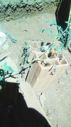 criações da natureza Cultivo Criador Imagem Arte Water Beach Sand High Angle View Close-up