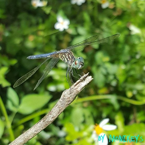 Dragonfly Outdoors Wildlife & Nature Protected Areas Naturelovers Taking Photos Nature Outdoor Photography Picoftheday Wildlife