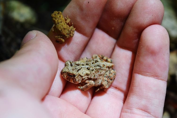 Toads Nature Nature Lover Nature_collection Nature Photography Little Guy Tiny Small Animals Nikon D3300 Nikon Adirondacks Adirondack Mountains