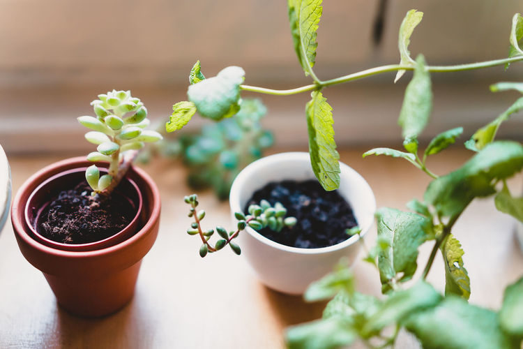Craft Items Craftsmanship  Vintage Craft Arts And Crafts Potted Plant Growth Plant Food And Drink Leaf Green Color Plant Part Nature No People Selective Focus Freshness Succulent Plant Close-up Table Focus On Foreground Healthy Eating Cactus Beauty In Nature Outdoors Flower Pot Houseplant