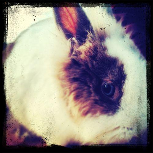 New rabbit Newrabbit First Eyeem Photo