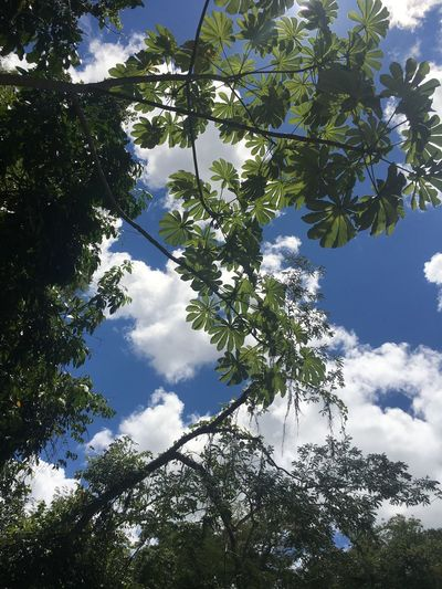 EyeEmNewHere EyeEmBestPics Tree Nature Low Angle View Branch Sky Growth Beauty In Nature Tranquility Cloud - Sky No People Outdoors Day Close-up EyeEm Best Edits EyeEm Best Shots Landscape Eco Tourism Tranquility Beauty In Nature Tranquil Scene Eye4photography
