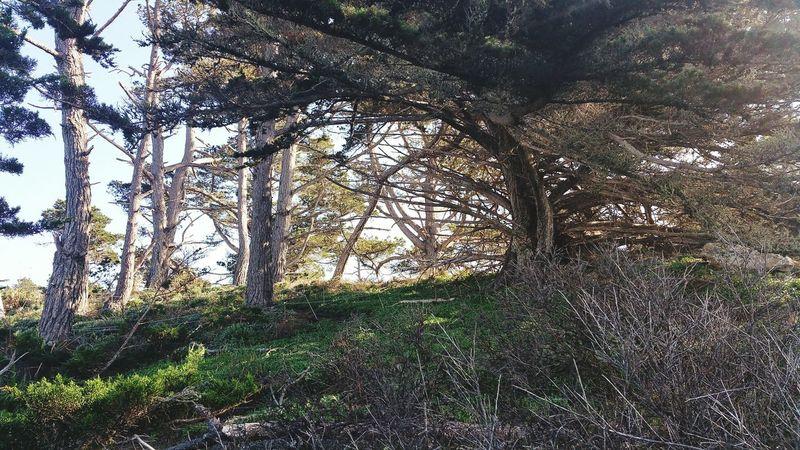 Point Lobos Ca Hikingadventures Californiaadventures San Jose, Ca