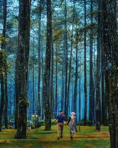 Rear view of people standing by trees in forest