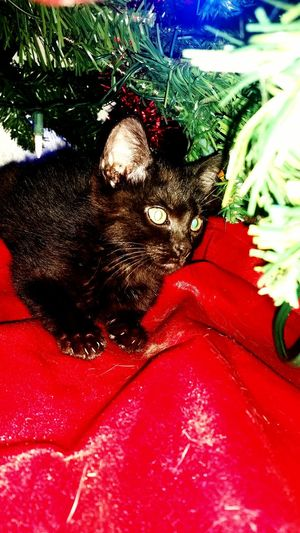 My little cutie lloyd Meow Black Kitty Lloyd Christmas Kitten Green Eyes Dumbanddumberto