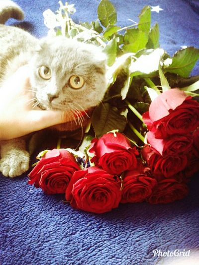 Flower Pets Domestic Cat Rose - Flower Domestic Animals Indoors  No People