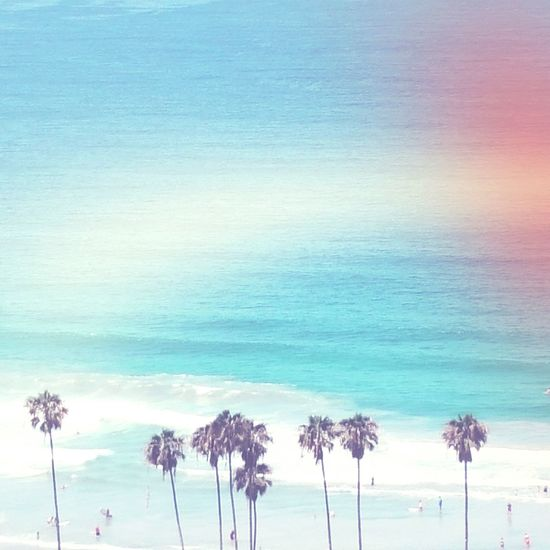 OpenEdit Turquoise Summer Color Explosion Scenic Color Of Life Summer Palm
