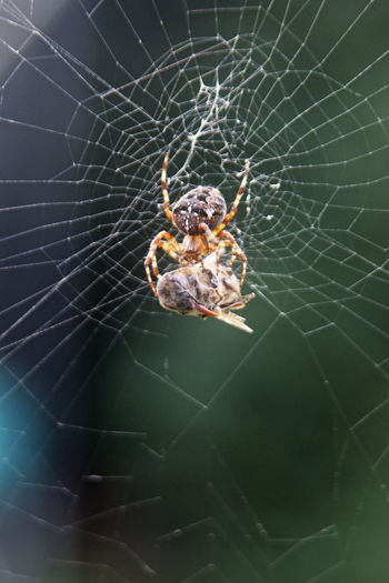 Animal Wildlife Beauty In Nature Close-up Insect Outdoors Spider Spider Web Survival Perspectives On Nature