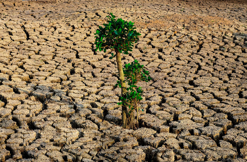 Tree growing racked and dry soil in arid areas landscape panorama