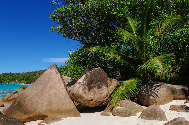 Seychelles Nature Beauty In Nature Scenics - Nature No People Seychelles Beach Sand White Sand Palm Tree Travel Destinations Paradise Paradise Beach Ocean Natuer_collection Nature Colorful Sky Stone Rocks Rock - Object Green Color Beauty In Nature Africa Cloud - Sky