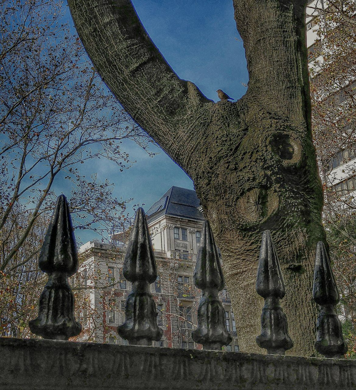 tree, statue, day, built structure, sculpture, history, religion, low angle view, architecture, spirituality, no people, outdoors, place of worship, tree trunk, growth, building exterior, nature, sky