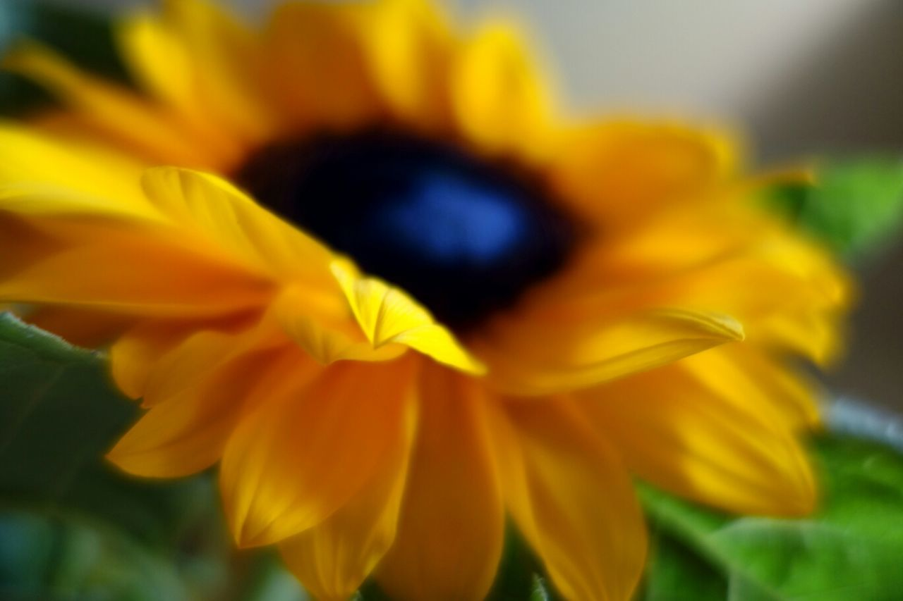 Selective focus on beautiful yellow flower blooming outdoors