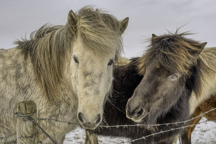 Close-up of two horses on field