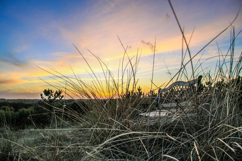 Beach Grass Bench Denmark Beach Grass🌱 Beauty In Nature Cloud - Sky Day Dune Grass Growth Landscape Nature No People Outdoors Pine Tree Plant Scenics Sky Sunset Tranquil Scene Tranquility