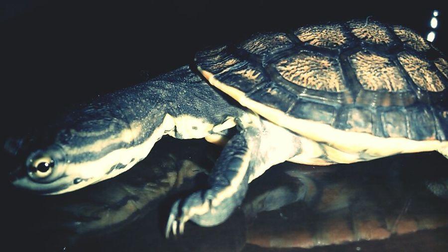 My Turtle ❤ Turtle I ♥ Turtles  My Turtle :)