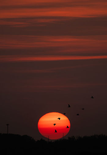 Silhouette of balloons at sunset