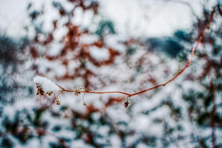 Tree Plant Cold