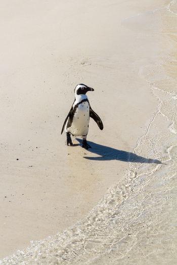 Bird perching on beach