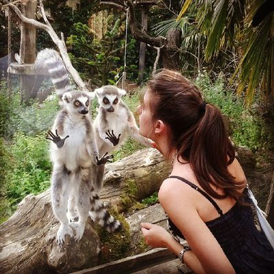 Il triangolo no! ♡ Zoo Animals  Secondo Voi Si Assomigliano ?? Lemurs