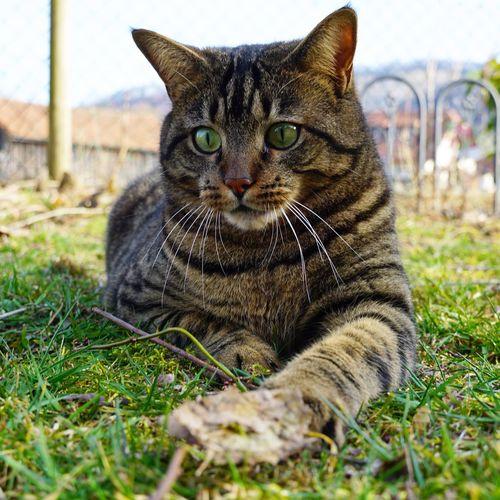CAT Mammal One Animal Pets Animal Themes Cat Domestic Cat Animal