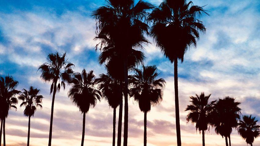 Hello World Eyemphotography EyeEm Nature Lover Sunset_collection #venicebeach