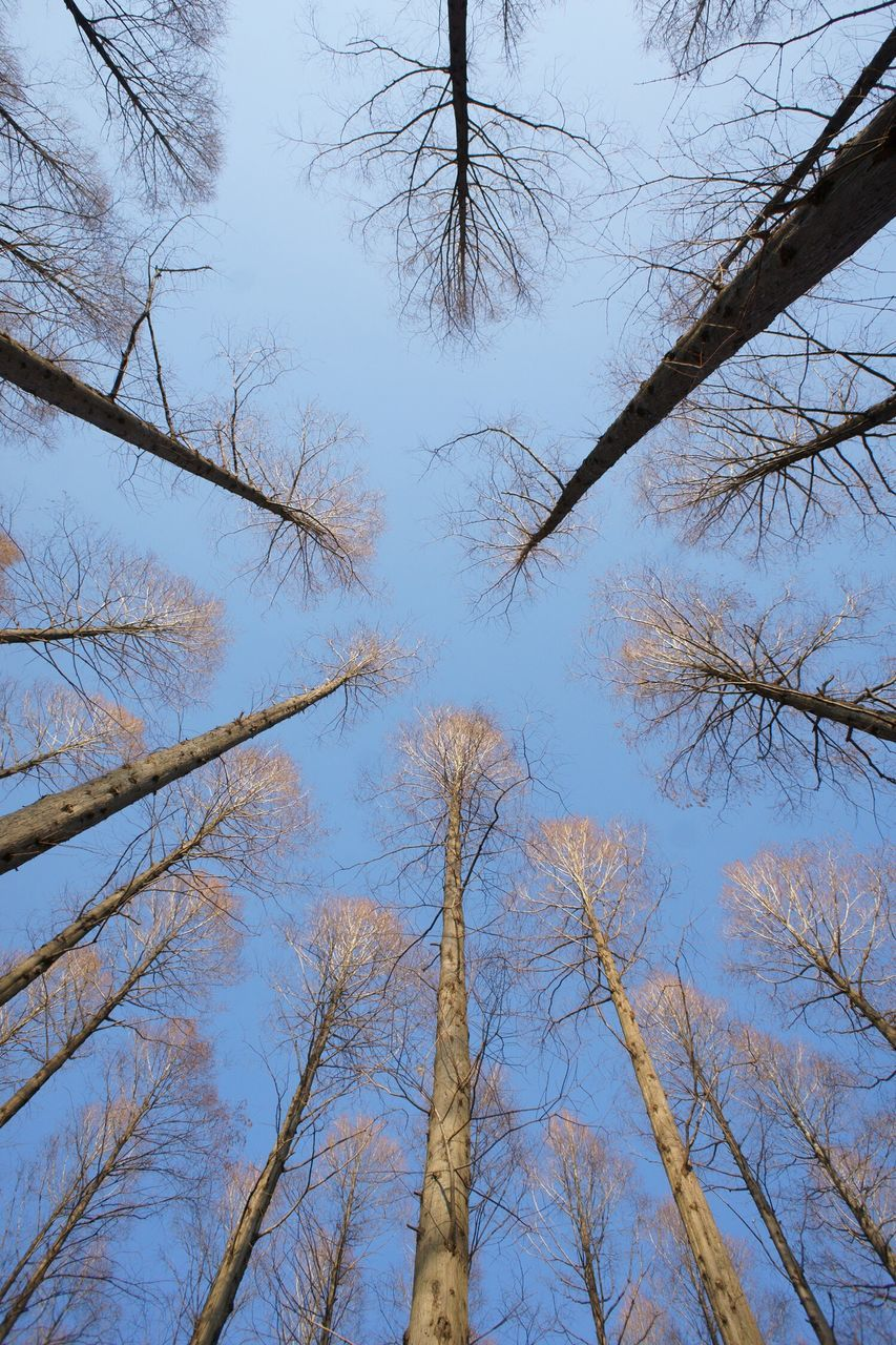 low angle view, tree, nature, day, forest, no people, outdoors, growth, tree trunk, tranquility, sky, beauty in nature, clear sky
