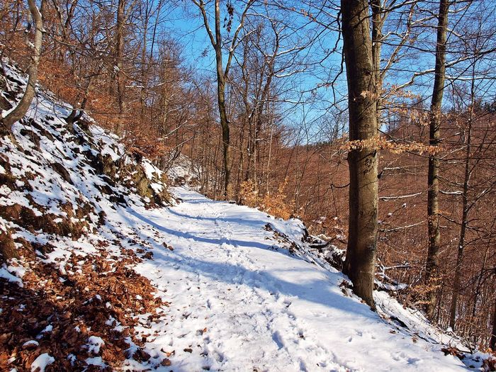 Wandern im Winterwald Beauty In Nature Cold Temperature Day Harzmountains Hike Landscape Nature No People Outdoors Scenics Snow ❄ Tranquility Tree Trees Wandern Way Winter Winterwald Wood