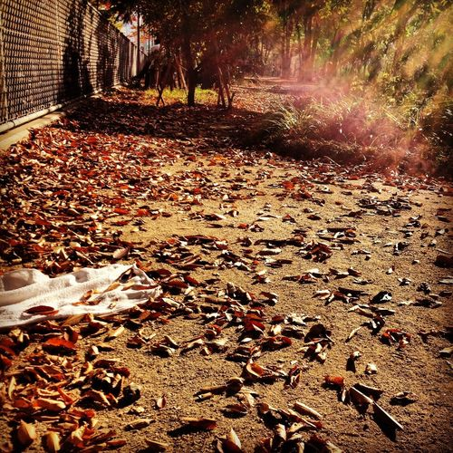 Surface level of autumn leaves