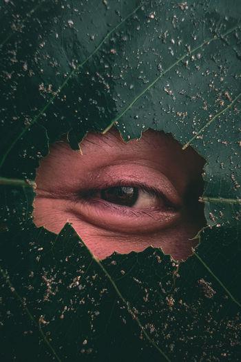 Close-up of human eye peeking through leaf