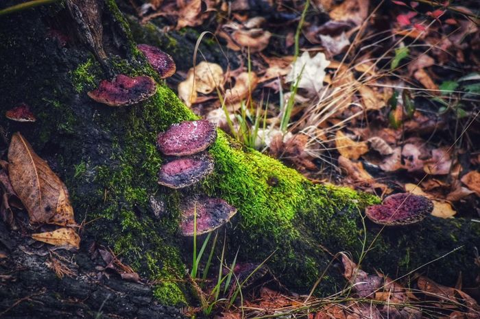 Forest Beauties! Mushrooms WildMushrooms Forest Forestbathing Moss Nature Growth No People Outdoors Plant Animal Themes High Angle View Day Fragility Beauty In Nature Freshness Close-up