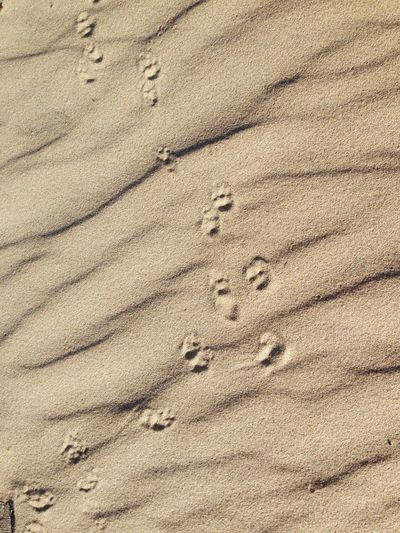 High Angle View Of Paw Prints At Beach