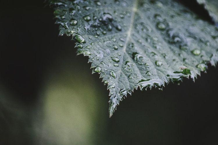 Drop Water Nature Close-up Plant Sadness Weep Tears