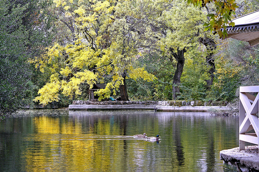 Estanque del capricho Tree Water Lake Beauty In Nature Nature Reflection Tranquility Bird Animal Animals In The Wild Park Duck Autumn Autumn colors Autumn Leaves Autumn Color Vertebrate No People Scenics - Nature Kiosko Kiosk Watertight Parque Del Capricho, Madrid, Spain