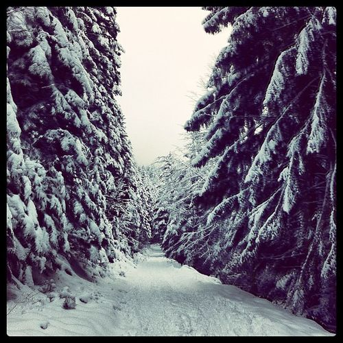 Instrcool Instragram Instrasnow Photointheday photooftheday snow france hoplagram labresse montagne mountain vosges neige