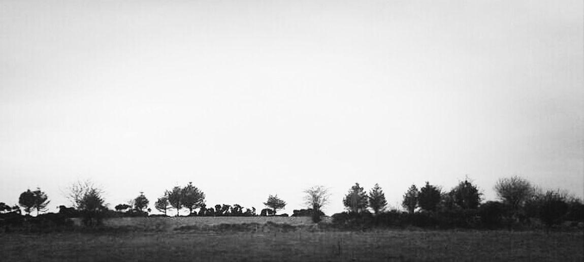 this noon's horizon #horizon #amlp Bnw Sky And Trees